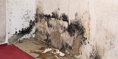 HPC Mould Remediation