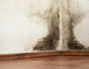 Mould remediation combatting mould in properties